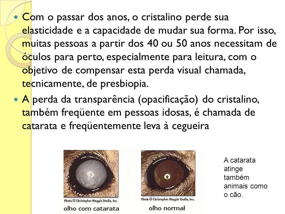 Com o passar dos anos, o cristalino perde sua elasticidade e a capacidade de mudar sua forma. Por isso, muitas pessoas a partir dos 40 ou 50 anos nece