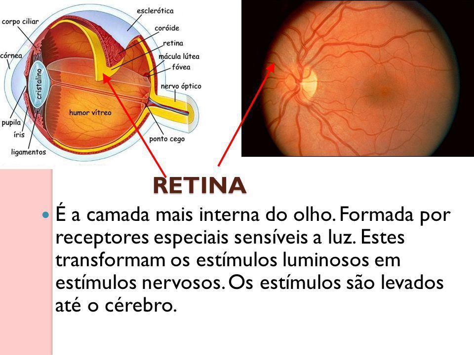 RETINA É a camada mais interna do olho. Formada por receptores especiais sensíveis a luz. Estes transformam os estímulos luminosos em estímulos nervos