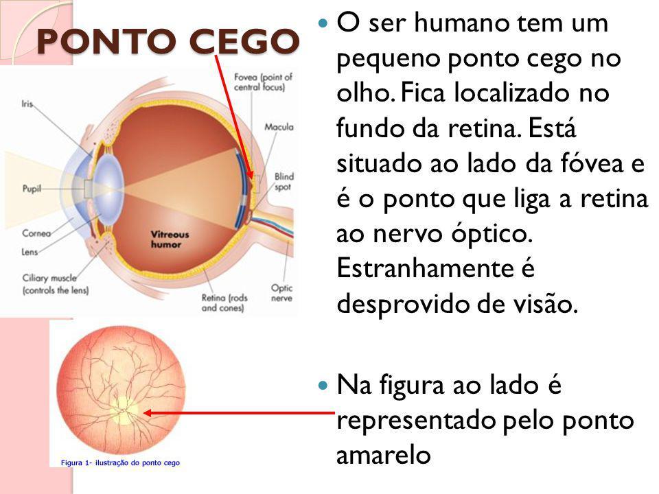 PONTO CEGO O ser humano tem um pequeno ponto cego no olho. Fica localizado no fundo da retina. Está situado ao lado da fóvea e é o ponto que liga a re