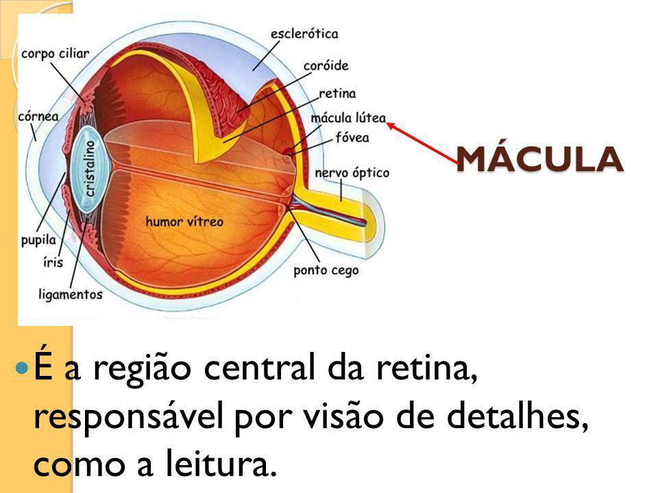 MÁCULA É a região central da retina, responsável por visão de detalhes, como a leitura.