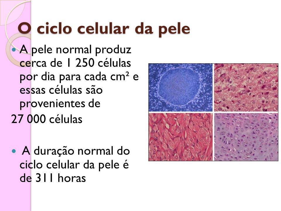 O ciclo celular da pele A pele normal produz cerca de 1 250 células por dia para cada cm² e essas células são provenientes de 27 000 células A duração