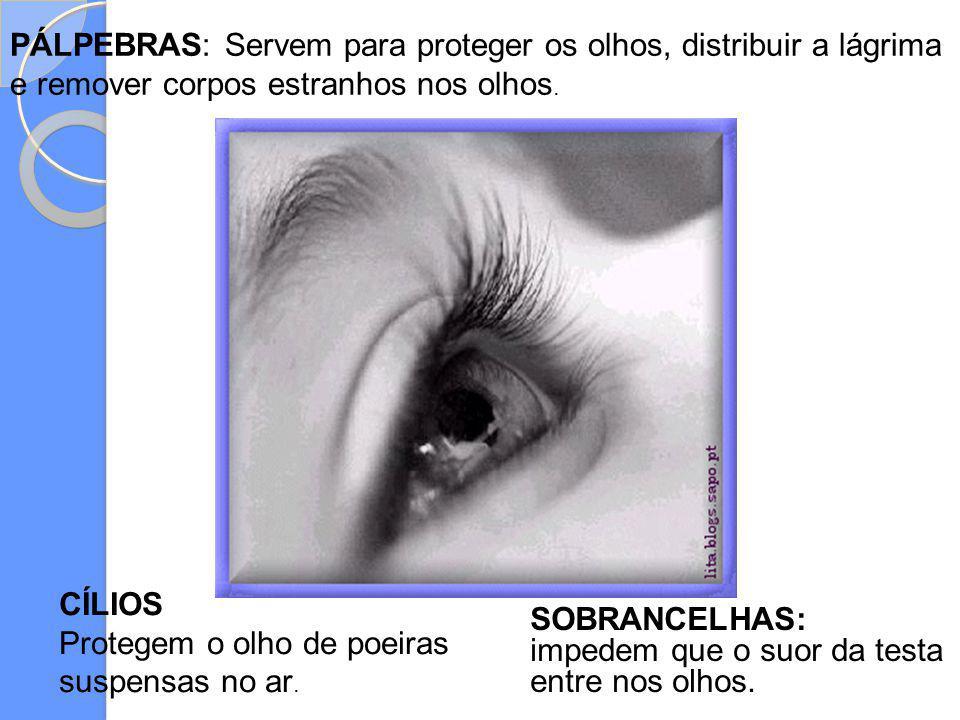 SOBRANCELHAS: impedem que o suor da testa entre nos olhos. PÁLPEBRAS: Servem para proteger os olhos, distribuir a lágrima e remover corpos estranhos n