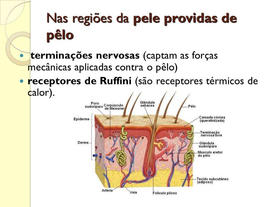 A ORELHA MÉDIA O orelha média é uma pequena cavidade situada no osso temporal, atrás do tímpano.
