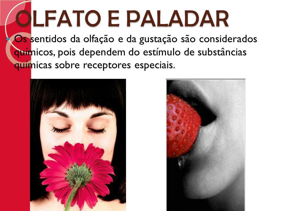 OLFATO E PALADAR Os sentidos da olfação e da gustação são considerados químicos, pois dependem do estímulo de substâncias químicas sobre receptores es