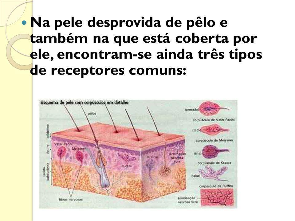 * Psoríase - doença autoimune da pele, aspecto de intensa descamação.