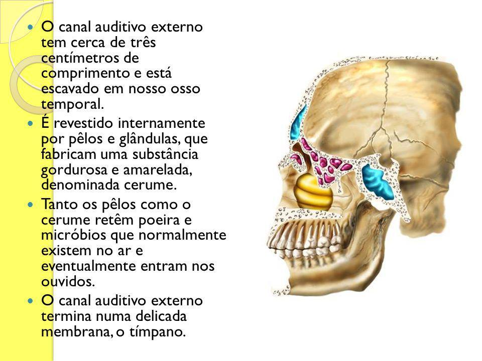 O canal auditivo externo tem cerca de três centímetros de comprimento e está escavado em nosso osso temporal. É revestido internamente por pêlos e glâ