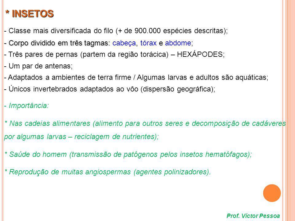 Aberturas do aparelho respiratório Formado por várias unidades denominadas omatídeos Prof.