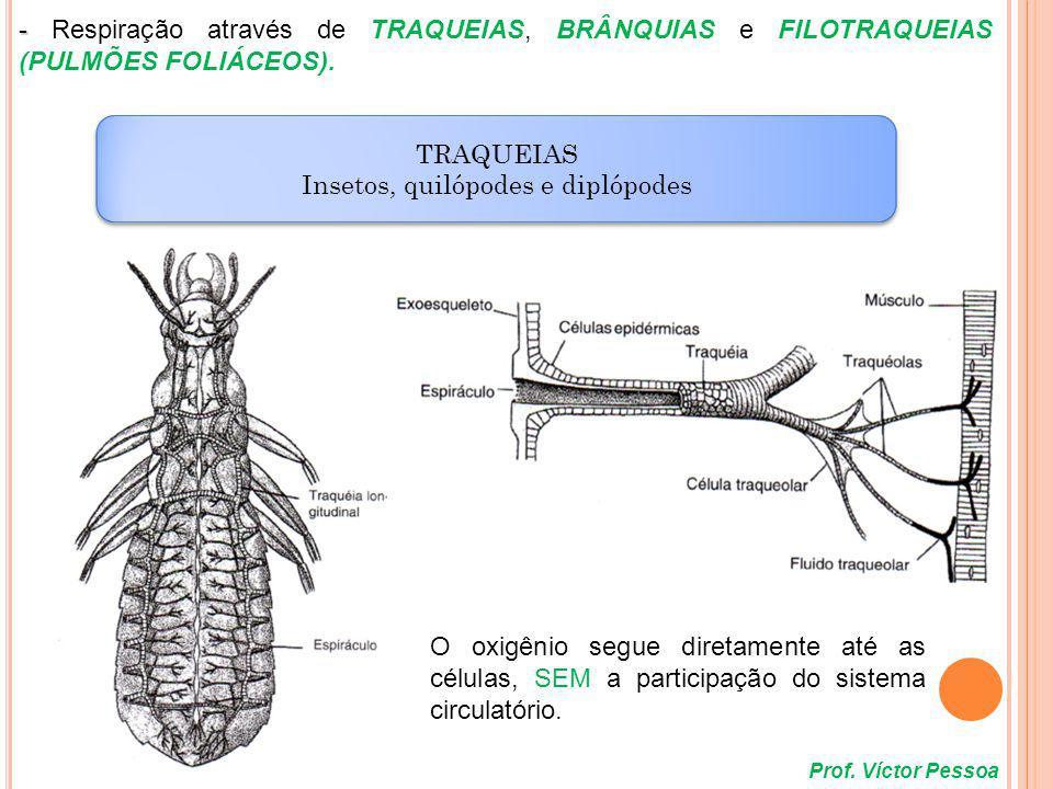 Prof. Víctor Pessoa BRÂNQUIAS Crustáceos BRÂNQUIAS Crustáceos
