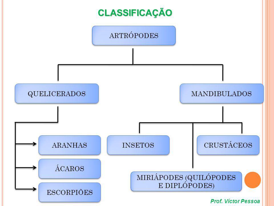 * CRUSTÁCEOS - Corpo dividido em e ; - Corpo dividido em CEFALOTÓRAX e ABDÔMEN; - Apresentam 2 pares de antenas; - Esqueleto quitinoso impregnado por carbonato de cálcio (maior rigidez); - Existência de apêndices locomotores no cefalotórax e abdome; - Aquáticos (lagosta, siri, caranguejo, camarão) e terrestres (tatuzinhos – de - jardim); Prof.