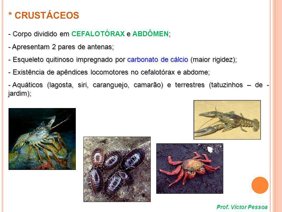 Representação esquemática de um camarão equilíbrio / tato / paladar (2º e 3º metâmeros) (2º e 3º metâmeros) Fusão de 6 metâmeros embrionários anteriores pernas maxilares (manipulação do alimento) caminhar nadar e caminhar cauda (nado) Prof.