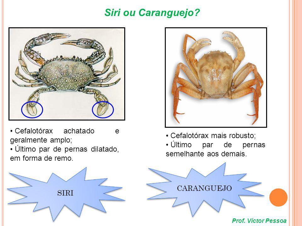 * QUELICERADOS - Presença de e (captura e manipulação do alimento); - Presença de PEDIPALPOS e QUELÍCERAS (captura e manipulação do alimento); - Corpo dividido em dois tagmas: e ; - Corpo dividido em dois tagmas: cefalotórax (prosoma) e abdômen (opistosoma); - Quatro pares de pernas; - Não apresentam mandíbulas nem antenas; - Representados pelas aranhas, escorpiões, ácaros e carrapatos.