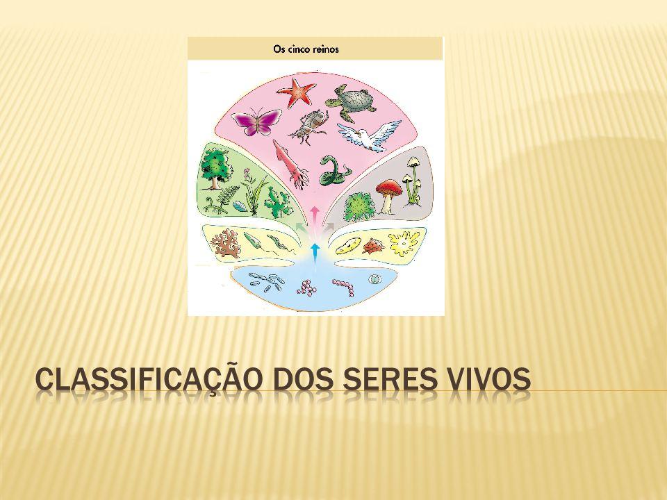 O sistema de classificação serve para facilitar o estudo e a identificação dos seres vivos que existe na terra.