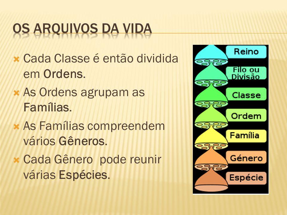 Cada Classe é então dividida em Ordens.As Ordens agrupam as Famílias.
