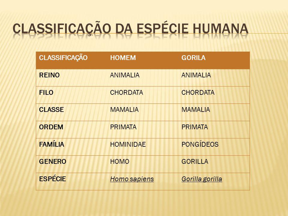 CLASSIFICAÇÃOHOMEMGORILA REINOANIMALIA FILOCHORDATA CLASSEMAMALIA ORDEMPRIMATA FAMÍLIAHOMINIDAEPONGÍDEOS GENEROHOMOGORILLA ESPÉCIEHomo sapiensGorilla gorilla