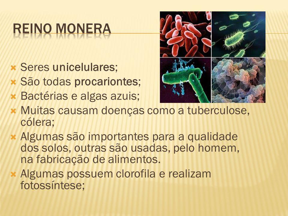 Seres unicelulares; São todas procariontes; Bactérias e algas azuis; Muitas causam doenças como a tuberculose, cólera; Algumas são importantes para a qualidade dos solos, outras são usadas, pelo homem, na fabricação de alimentos.
