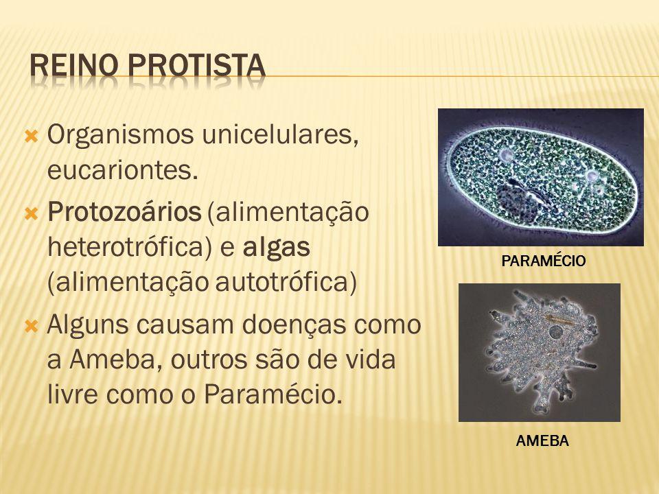 Organismos unicelulares, eucariontes.