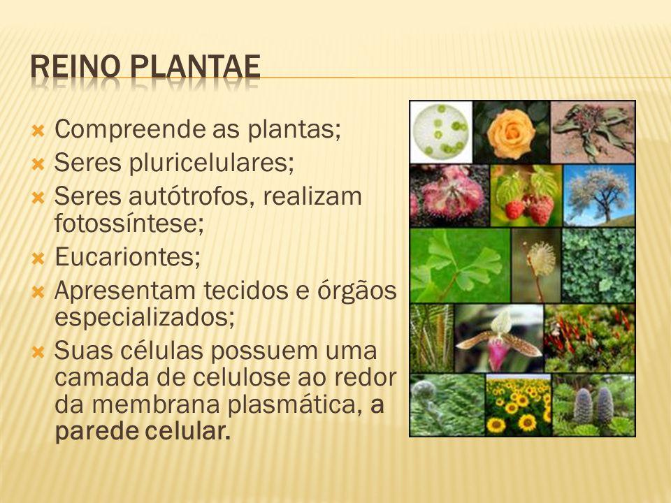 Compreende as plantas; Seres pluricelulares; Seres autótrofos, realizam fotossíntese; Eucariontes; Apresentam tecidos e órgãos especializados; Suas células possuem uma camada de celulose ao redor da membrana plasmática, a parede celular.