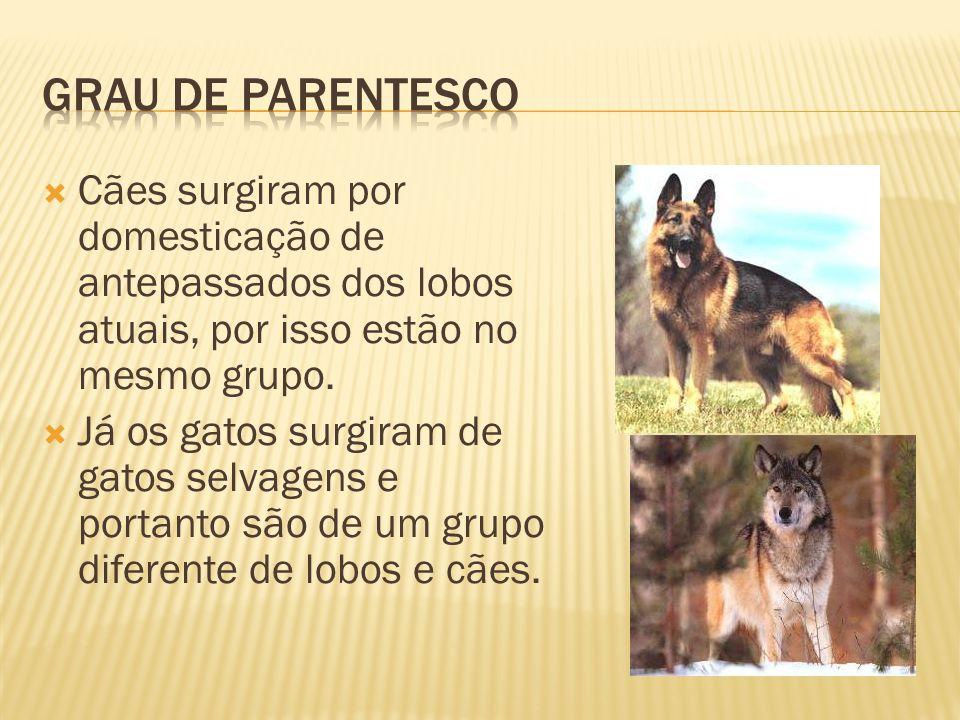 Cães surgiram por domesticação de antepassados dos lobos atuais, por isso estão no mesmo grupo.