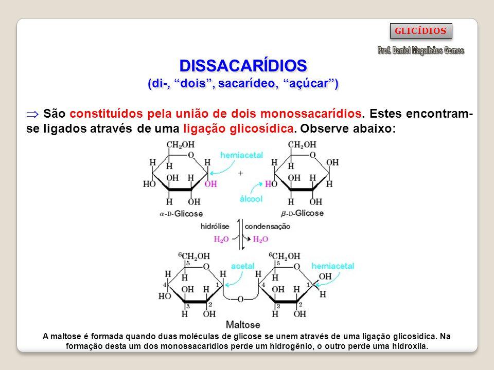 DISSACARÍDIOS (di-, dois, sacarídeo, açúcar) São constituídos pela união de dois monossacarídios. Estes encontram- se ligados através de uma ligação g