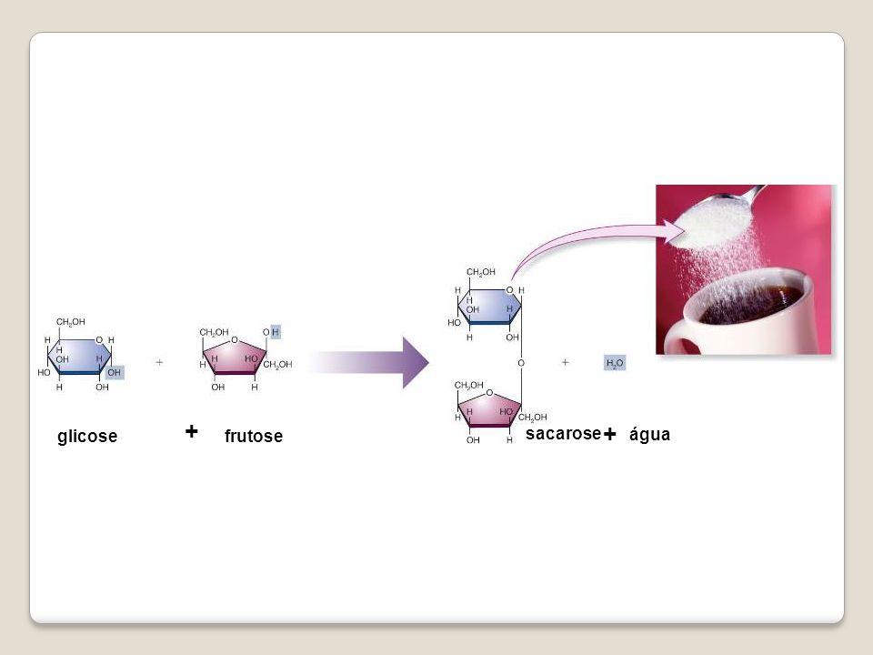 glicose sacarose água frutose + +