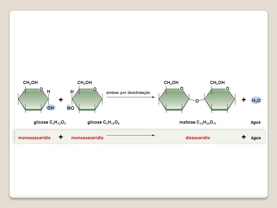 OO OO OH HO H H O ++ H2OH2O CH 2 OH água monossacarídiodissacarídioáguamonossacarídio ++ maltose C 12 H 22 O 11 glicose C 6 H 12 O 6 síntese por desid