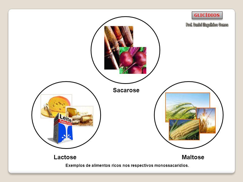 Sacarose LactoseMaltose GLICÍDIOS Exemplos de alimentos ricos nos respectivos monossacarídios.