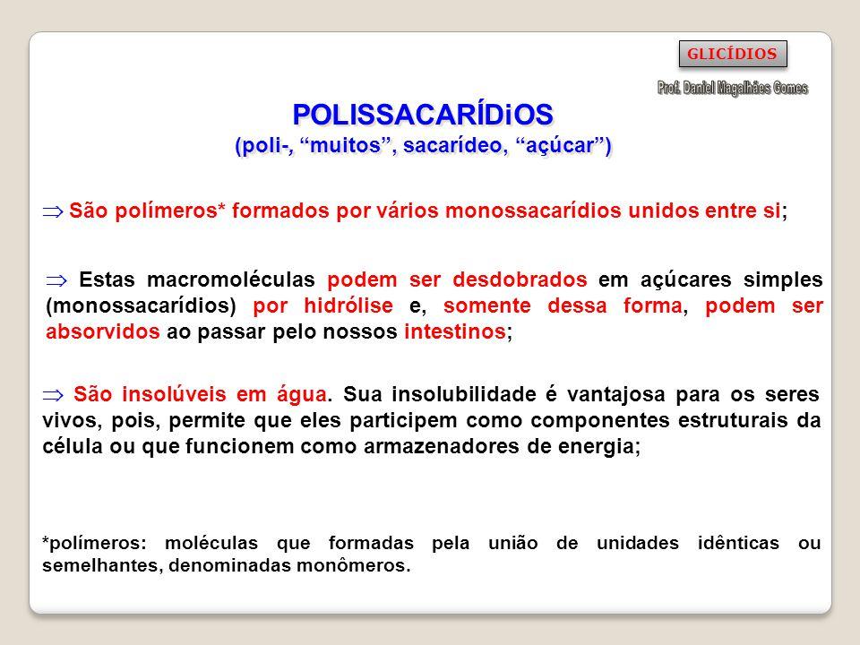 POLISSACARÍDiOS (poli-, muitos, sacarídeo, açúcar) São polímeros* formados por vários monossacarídios unidos entre si; São insolúveis em água. Sua ins