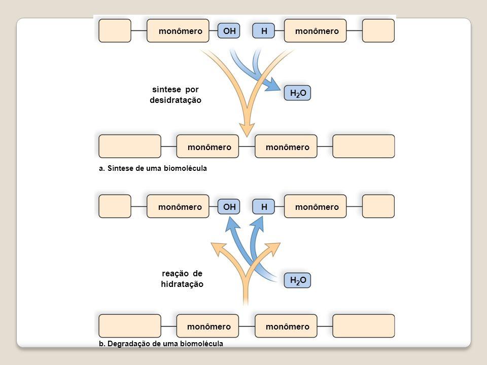 monômero síntese por desidratação H 2 O monômero OHH monômero OHH b. Degradação de uma biomolécula a. Síntese de uma biomolécula monômero H 2 O reação