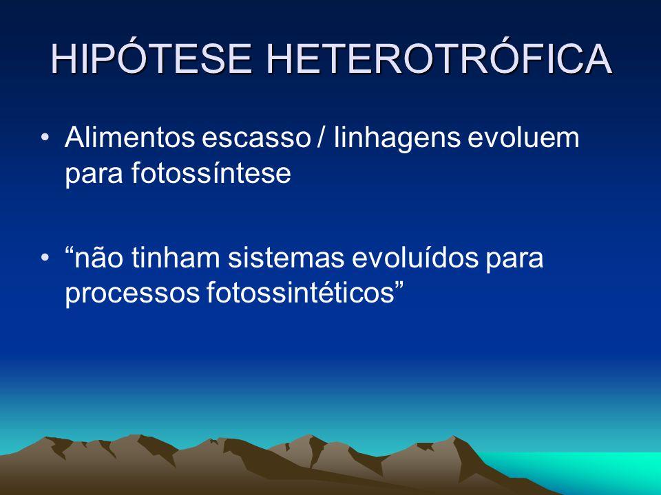 HIPÓTESE HETEROTRÓFICA Alimentos escasso / linhagens evoluem para fotossíntese não tinham sistemas evoluídos para processos fotossintéticos
