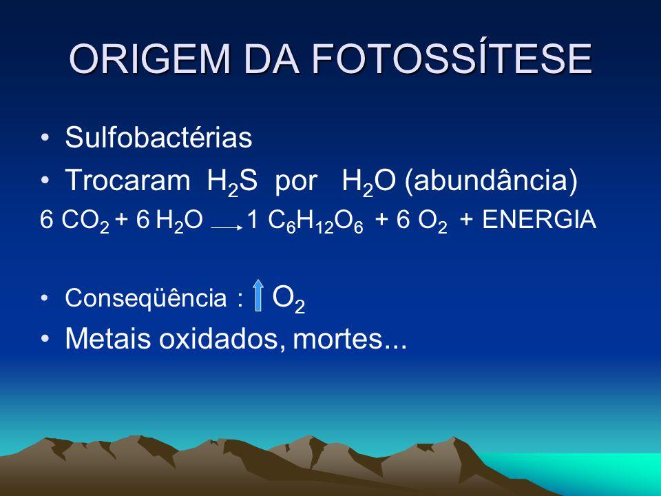 ORIGEM DA FOTOSSÍTESE Sulfobactérias Trocaram H 2 S por H 2 O (abundância) 6 CO 2 + 6 H 2 O 1 C 6 H 12 O 6 + 6 O 2 + ENERGIA Conseqüência : O 2 Metais oxidados, mortes...