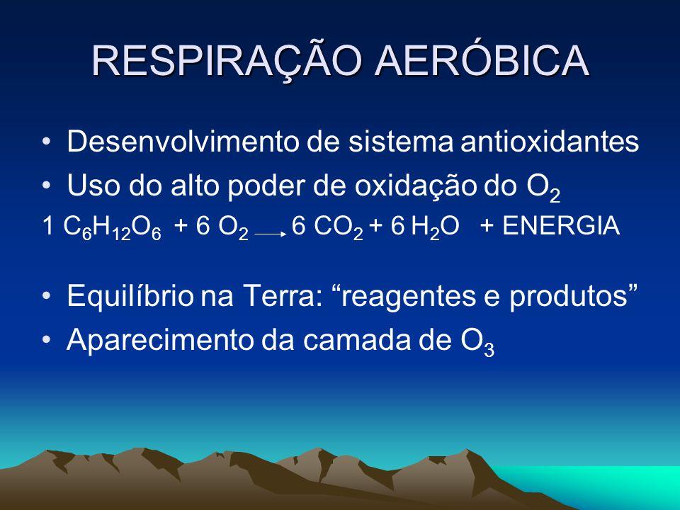 RESPIRAÇÃO AERÓBICA Desenvolvimento de sistema antioxidantes Uso do alto poder de oxidação do O 2 1 C 6 H 12 O 6 + 6 O 2 6 CO 2 + 6 H 2 O + ENERGIA Equilíbrio na Terra: reagentes e produtos Aparecimento da camada de O 3