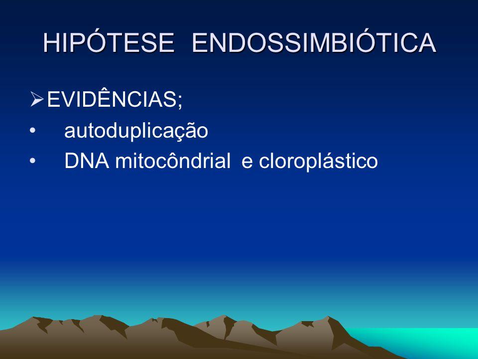 HIPÓTESE ENDOSSIMBIÓTICA EVIDÊNCIAS; autoduplicação DNA mitocôndrial e cloroplástico