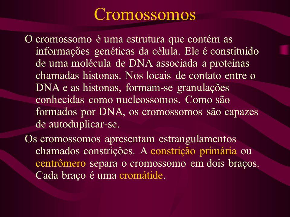 Cromossomos O cromossomo é uma estrutura que contém as informações genéticas da célula. Ele é constituído de uma molécula de DNA associada a proteínas