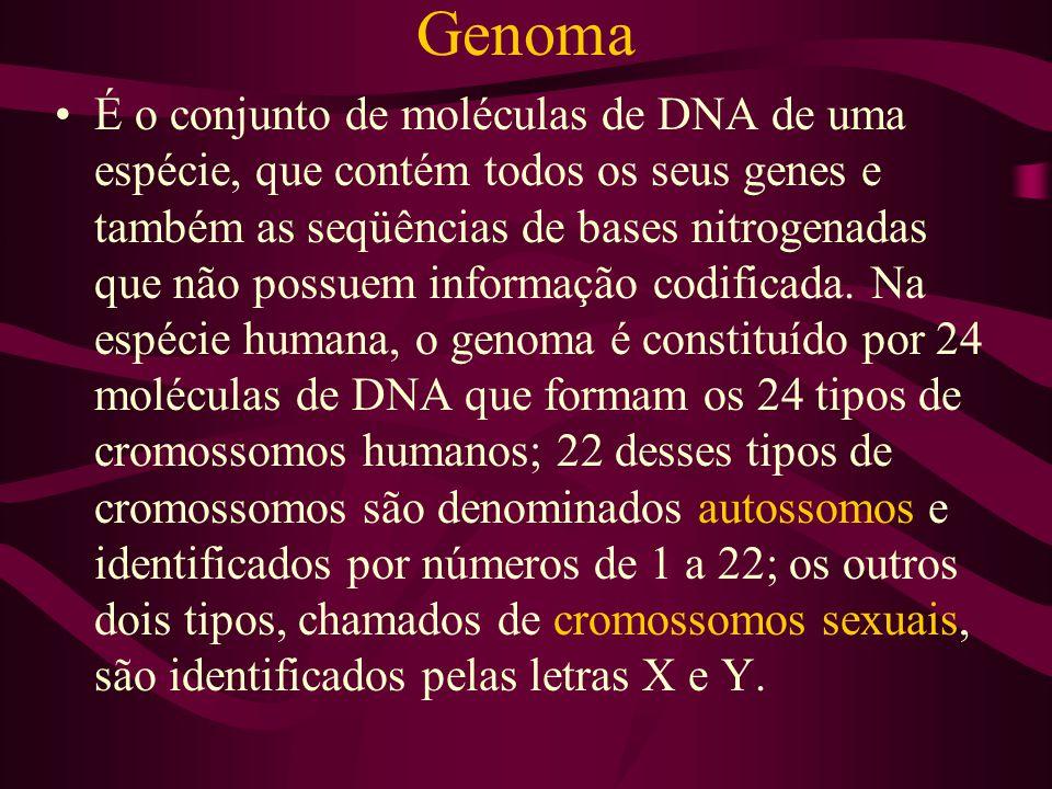Genoma É o conjunto de moléculas de DNA de uma espécie, que contém todos os seus genes e também as seqüências de bases nitrogenadas que não possuem in
