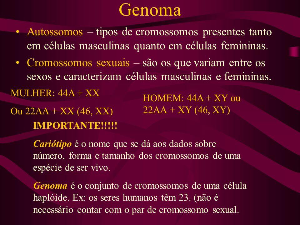 Genoma Autossomos – tipos de cromossomos presentes tanto em células masculinas quanto em células femininas. Cromossomos sexuais – são os que variam en