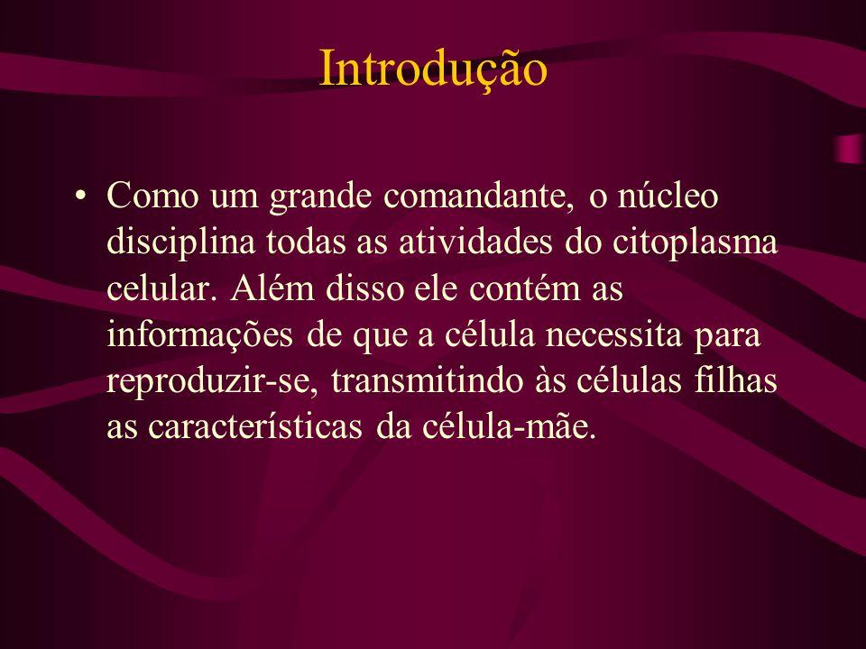 Introdução Como um grande comandante, o núcleo disciplina todas as atividades do citoplasma celular. Além disso ele contém as informações de que a cél