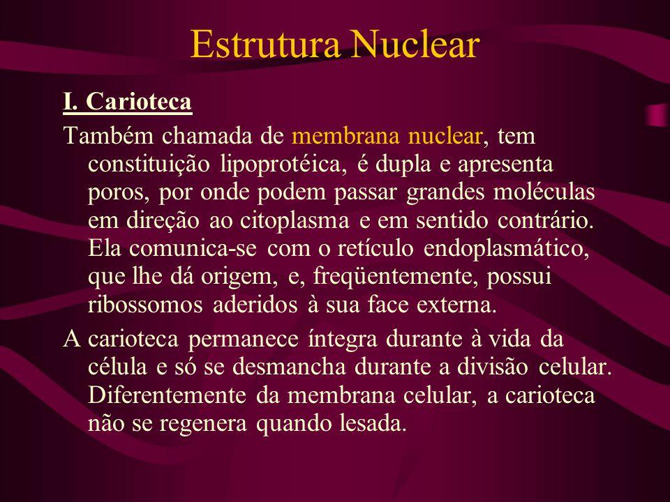 Estrutura Nuclear I. Carioteca Também chamada de membrana nuclear, tem constituição lipoprotéica, é dupla e apresenta poros, por onde podem passar gra