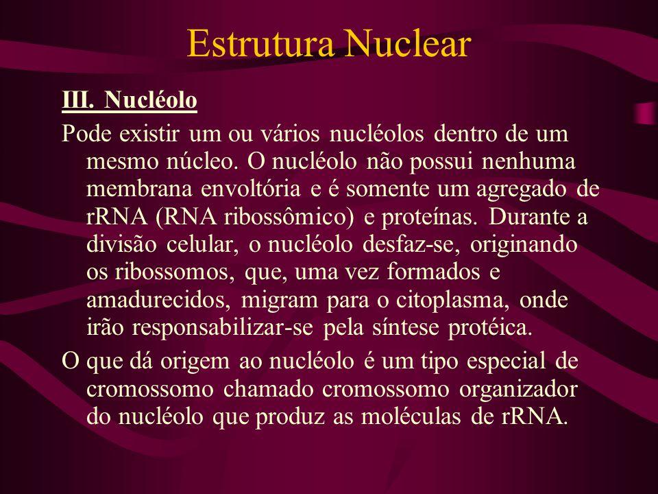Estrutura Nuclear III. Nucléolo Pode existir um ou vários nucléolos dentro de um mesmo núcleo. O nucléolo não possui nenhuma membrana envoltória e é s