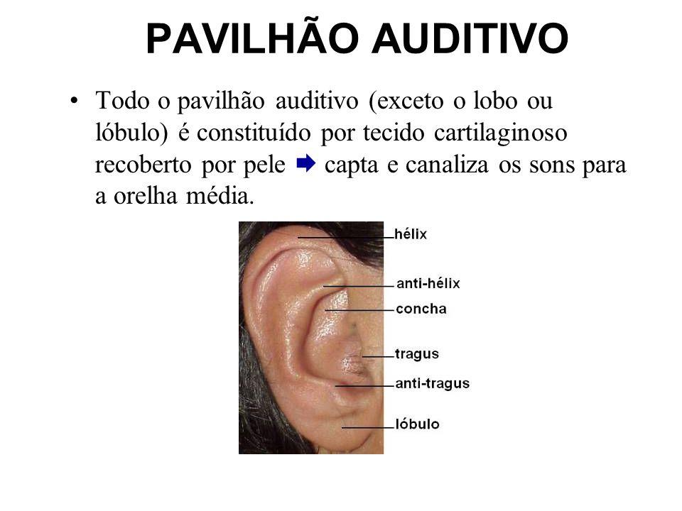 PAVILHÃO AUDITIVO Todo o pavilhão auditivo (exceto o lobo ou lóbulo) é constituído por tecido cartilaginoso recoberto por pele capta e canaliza os son