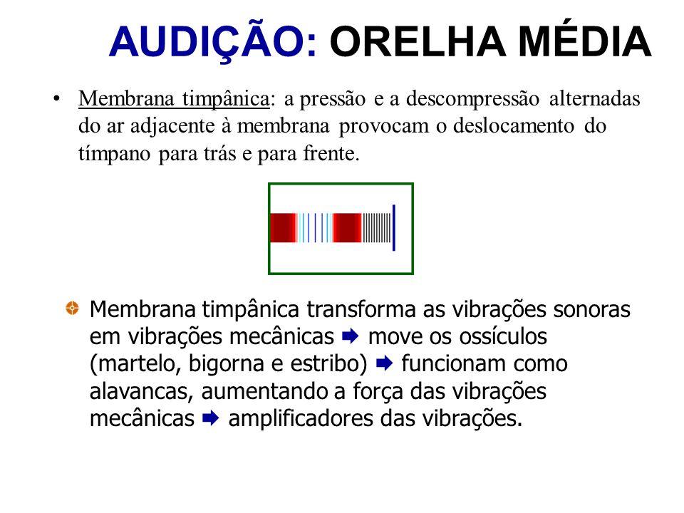 AUDIÇÃO: ORELHA MÉDIA Membrana timpânica: a pressão e a descompressão alternadas do ar adjacente à membrana provocam o deslocamento do tímpano para tr