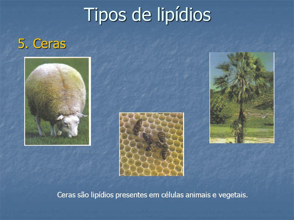 Tipos de lipídios 5. Ceras Ceras são lipídios presentes em células animais e vegetais.