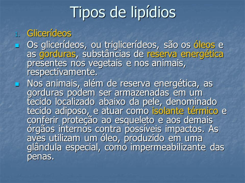 Tipos de lipídios 1. Glicerídeos Os glicerídeos, ou triglicerídeos, são os óleos e as gorduras, substâncias de reserva energética presentes nos vegeta
