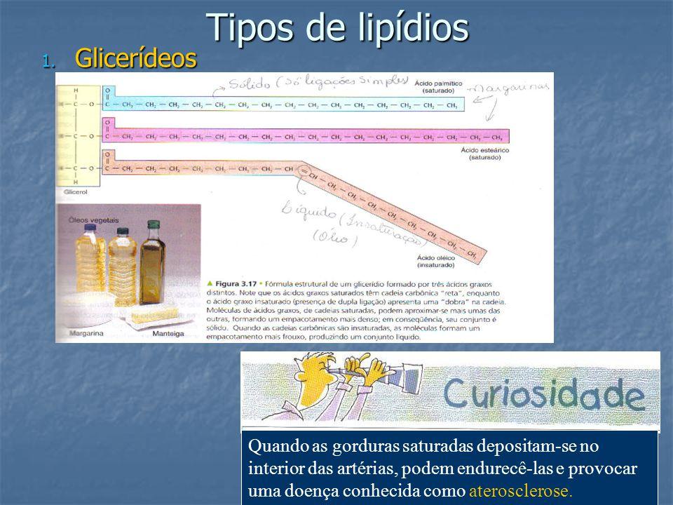 Tipos de lipídios 1. Glicerídeos Quando as gorduras saturadas depositam-se no interior das artérias, podem endurecê-las e provocar uma doença conhecid