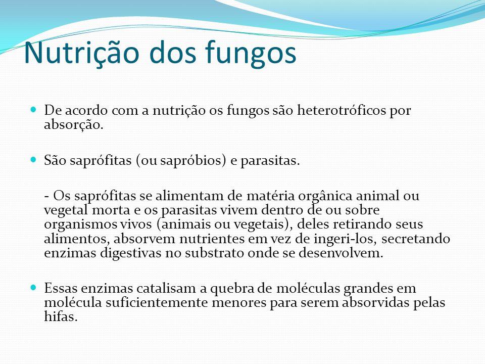 Nutrição dos fungos De acordo com a nutrição os fungos são heterotróficos por absorção. São saprófitas (ou sapróbios) e parasitas. - Os saprófitas se