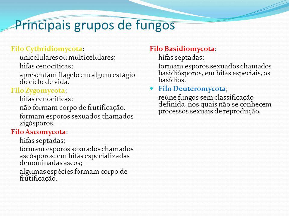 Principais grupos de fungos Filo Cythridiomycota: unicelulares ou multicelulares; hifas cenocíticas; apresentam flagelo em algum estágio do ciclo de v