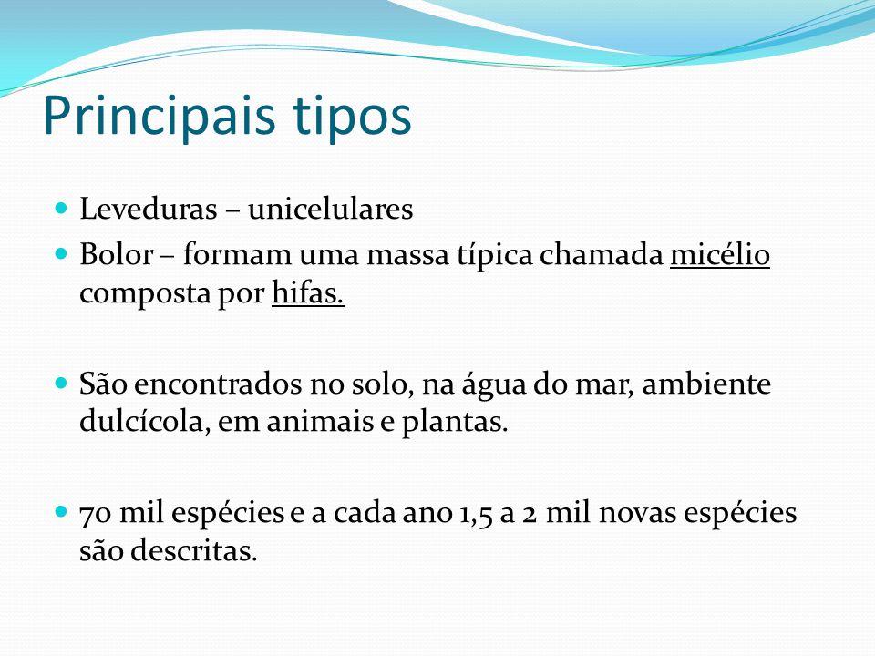 os fungos Amanita (alucinógeno) Tuber (trufas) Champignon Orelha de pau Queijo gorgonzola Aspergilus Levedura 2 Amanita (alucinógeno)