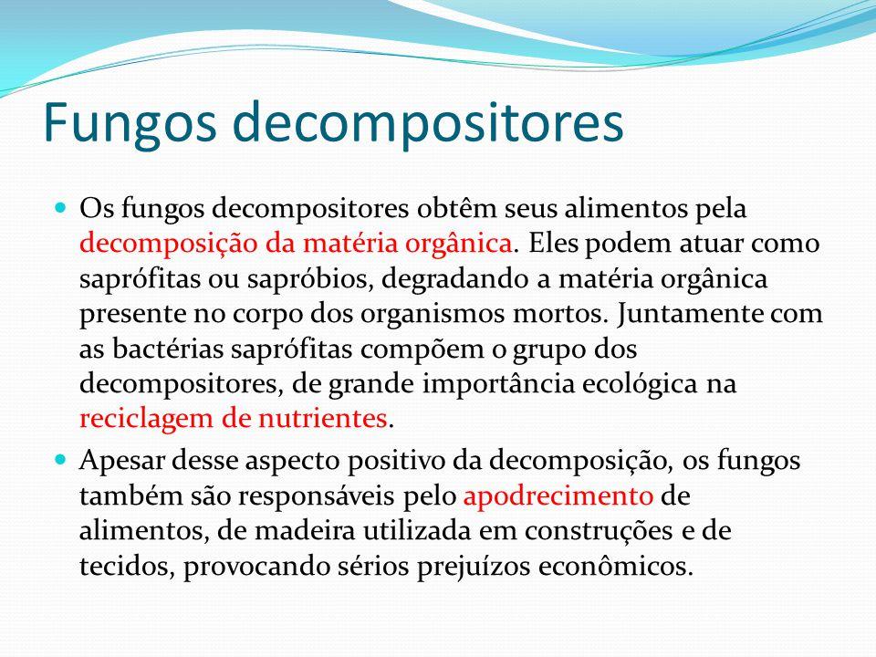 Fungos decompositores Os fungos decompositores obtêm seus alimentos pela decomposição da matéria orgânica. Eles podem atuar como saprófitas ou sapróbi