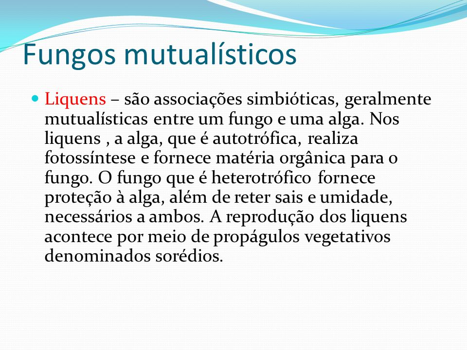 Fungos mutualísticos Liquens – são associações simbióticas, geralmente mutualísticas entre um fungo e uma alga. Nos liquens, a alga, que é autotrófica
