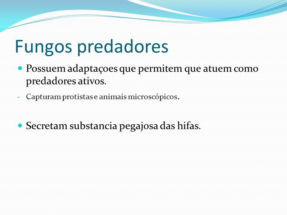 Fungos predadores Possuem adaptaçoes que permitem que atuem como predadores ativos. - Capturam protistas e animais microscópicos. Secretam substancia
