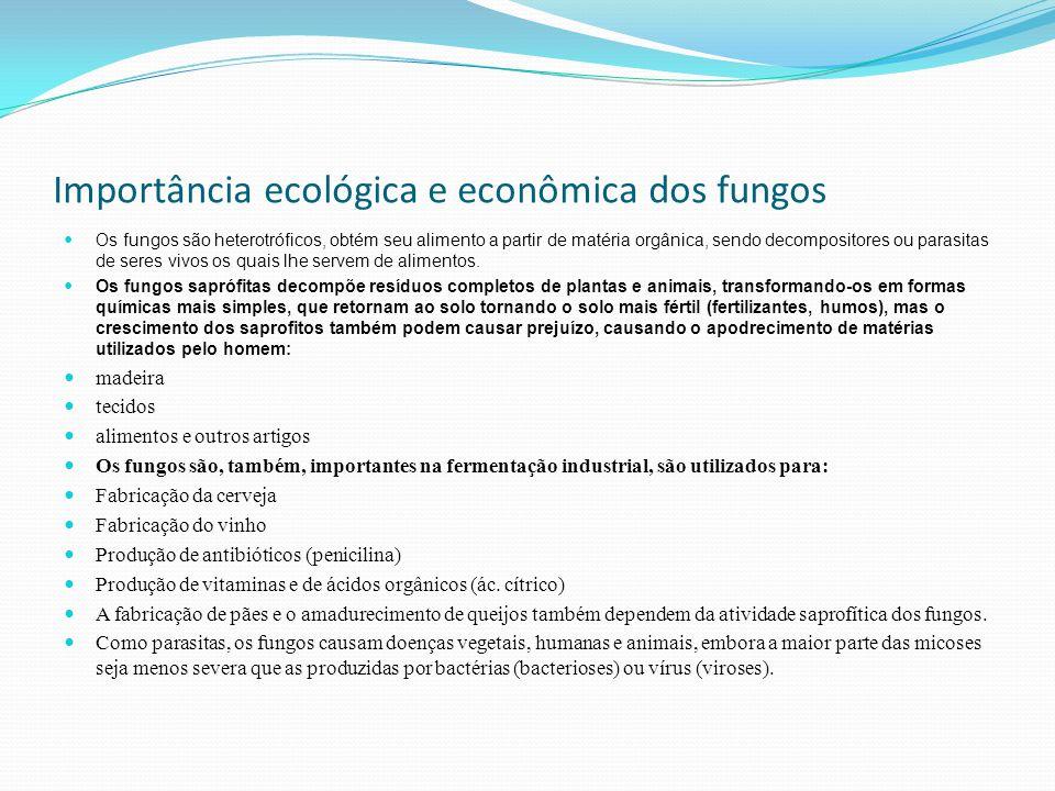 Importância ecológica e econômica dos fungos Os fungos são heterotróficos, obtém seu alimento a partir de matéria orgânica, sendo decompositores ou pa
